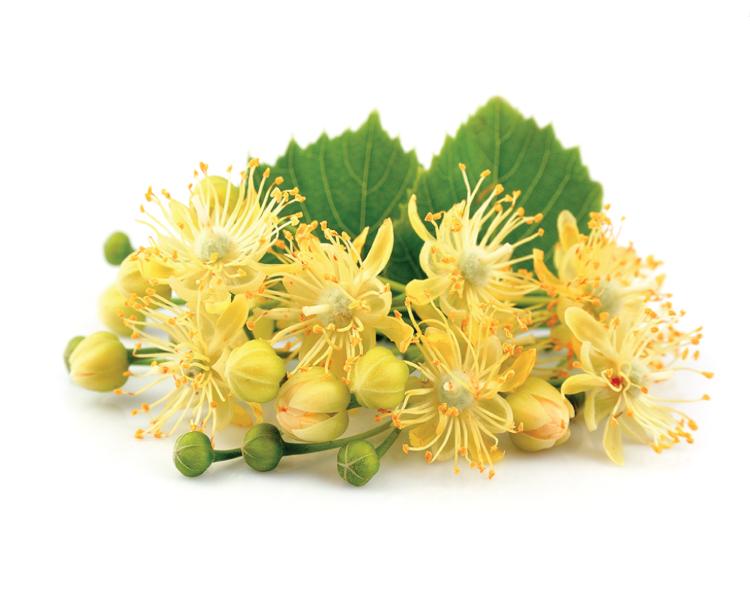 Liepu ziedu medus, 330g